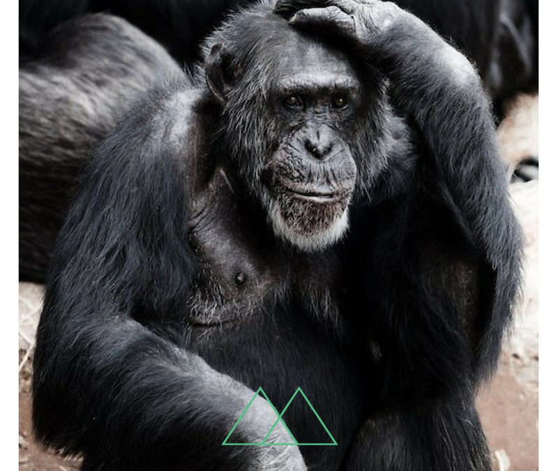 Monkey Mind – Apen in je hoofd? Wie had dat gedacht? [Blog]