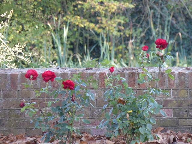 rozen en vragen